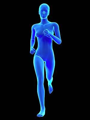 Anatomy Of Runner Poster by Sebastian Kaulitzki
