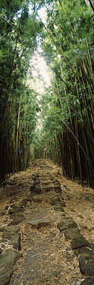 Bamboo Forest, Oheo Gulch, Seven Sacred Poster by Panoramic Images