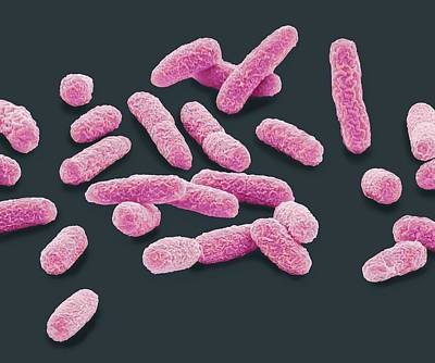 E. Coli Bacteria Poster by Steve Gschmeissner