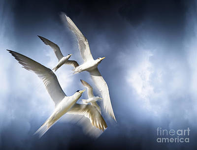 Freedom Poster by Jorgo Photography - Wall Art Gallery