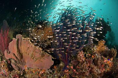 Indian Ocean, Indonesia, Raja Ampat Poster by Jaynes Gallery