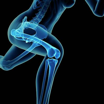 Skeletal System Of Jogger Poster by Sebastian Kaulitzki