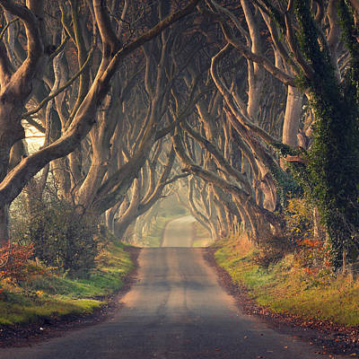 The Dark Hedges  Poster by Pawel Klarecki