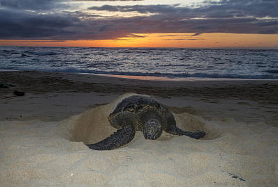 Turtle Beach Sunset Oahu Hawaii Poster by Jianghui Zhang
