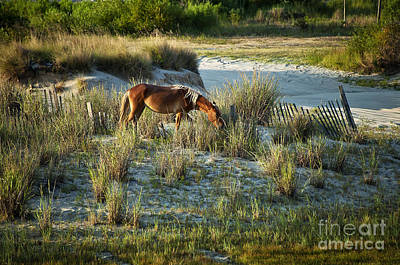 Wild Spanish Mustang Poster by John Greim