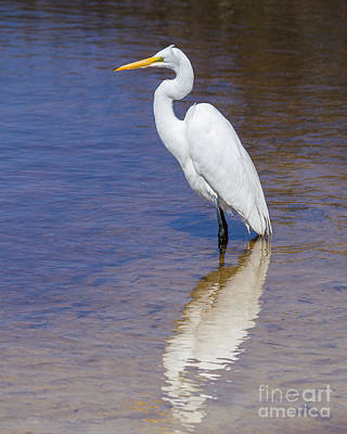 Great Egret Poster by Twenty Two North Photography