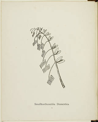 Nonsense Botany Collection By Edward Lear Poster by British Library