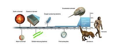 Evolution Of Earth Timeline Poster by Mikkel Juul Jensen