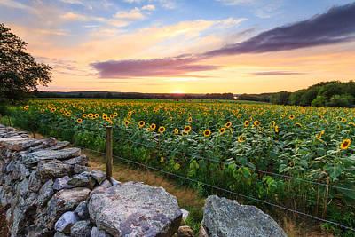Sunflower Sunset Poster by Bryan Bzdula
