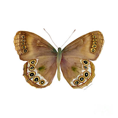 64 Woodland Brown Butterfly Poster by Amy Kirkpatrick