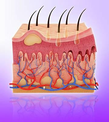 Human Skin Poster by Pixologicstudio