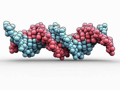 Dna (deoxyribonucleic Acid) Poster by Laguna Design