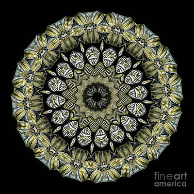 Kaleidoscope Ernst Haeckl Sea Life Series Poster by Amy Cicconi