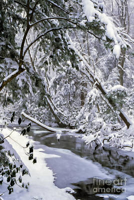 Winter Along Cranberry River Poster by Thomas R Fletcher