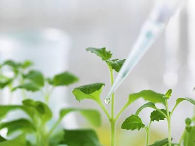 Plant Biotechnology Poster by Tek Image