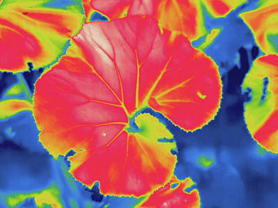 Thermogram Poster by Science Stock Photography