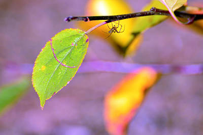 A Branch With Leaves Poster by Toppart Sweden