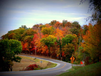 A Country Road In Autumn 1 Poster by Kay Novy