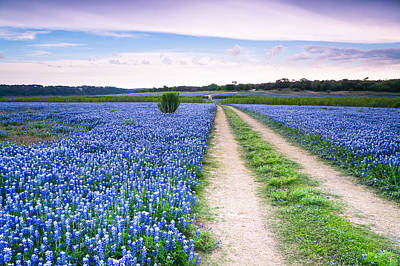 A Field Of Bluebonnets - Wildflower In Texas Poster by Ellie Teramoto