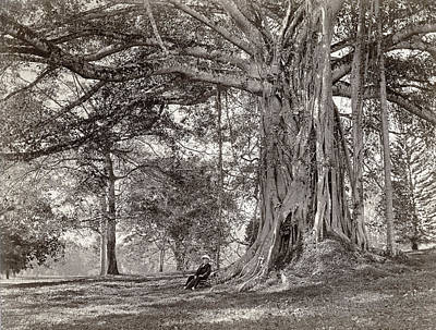 A Gentleman Sitting Beneath A Large Native Tree In British Ceylon Poster by Scowen and Co