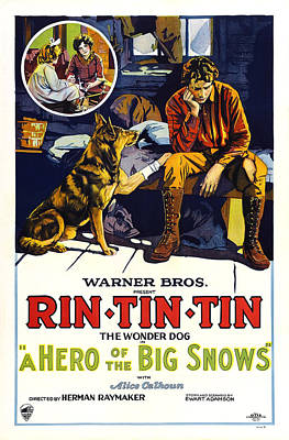 A Hero Of The Big Snows, Left Rin Tin Poster by Everett