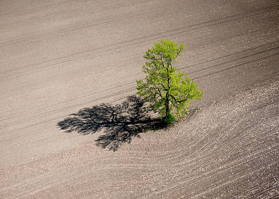 A Lone Tree In A Newly Seeded Corn Field. Richmond Ontario Dairy Farm. Poster by Rob Huntley