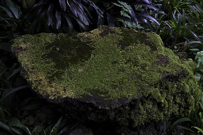 A Moss Covered Stone Inside The National Orchid Garden In Singapore Poster by Ashish Agarwal