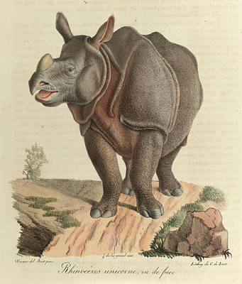 A Rhinoceros Poster by British Library