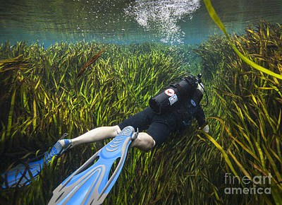 A Scuba Diver Swims Through An Poster by Michael Wood