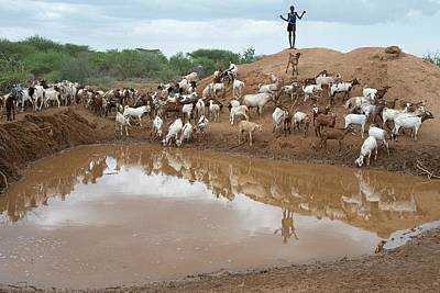 A Sheperd Tending Goats At A Waterhole Poster by Tony Camacho