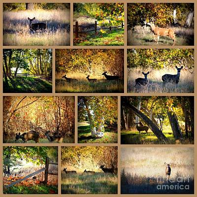 A Walk In Sycamore Grove Park Collage Poster by Carol Groenen