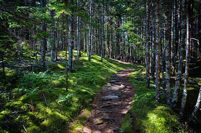 A Walk In The Woods Poster by John Haldane