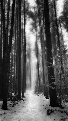 A Winters Path Black And White Poster by Bill Wakeley