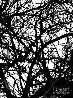 Abstract Branches Poster by Robert Yaeger