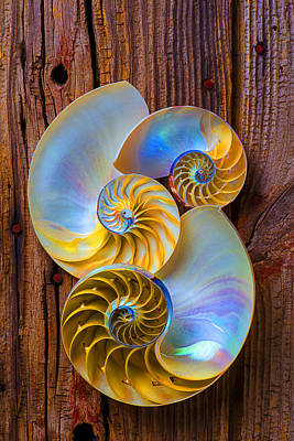 Abstract Chambered Nautilus Poster by Garry Gay