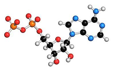 Adenosine Diphosphate Molecule Poster by Molekuul