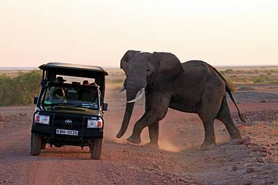 Africa, Kenya, Amboseli Poster by Kymri Wilt