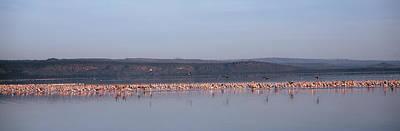 Africa, Kenya, Lake Nakuru National Poster by Panoramic Images