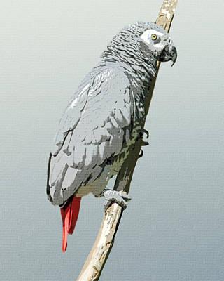 Birdwatching Poster featuring the digital art African Grey Parrot by Flo Karp
