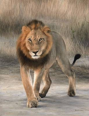 African Lion Painting Poster by Rachel Stribbling