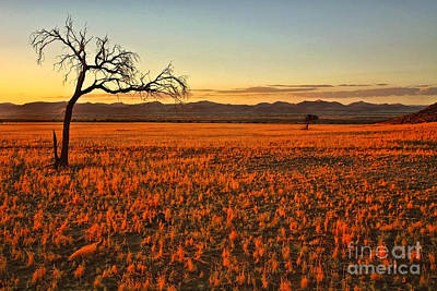 African Sunset Poster by Kate McKenna