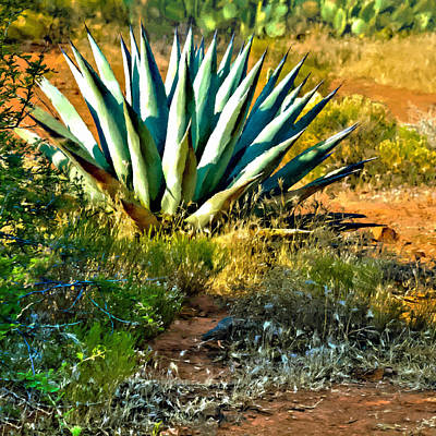 Agave In Secret Mountain Wilderness West Of Sedona Poster by Bob and Nadine Johnston