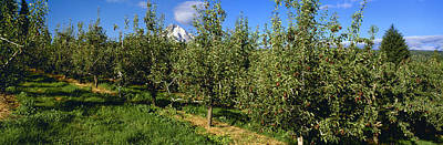 Agriculture - Bosc Pear Orchard Poster by Charles Blakeslee