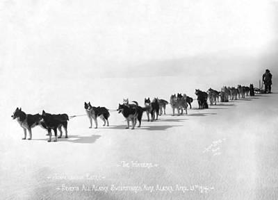 Alaska Champion Dog Sled Team 1914 Poster by Daniel Hagerman