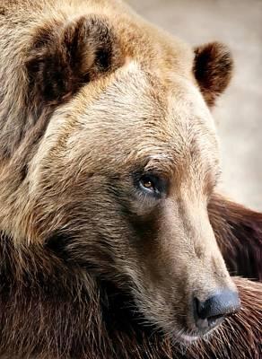 Alaskan Brown Bear Poster by Jim Hughes