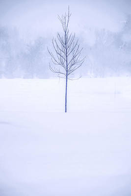 Alone In The Snow Poster by Andrew Soundarajan