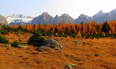 Alpine Larch Meadow Poster by Ramona Johnston
