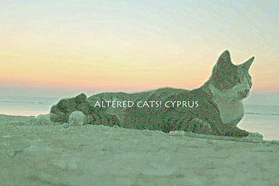 Altered Cats Cyprus Sunrise  Poster by Anita Dale Livaditis
