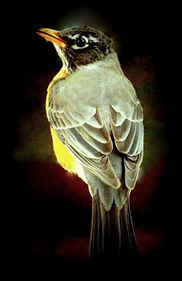American Robin Poster by Karen Wiles