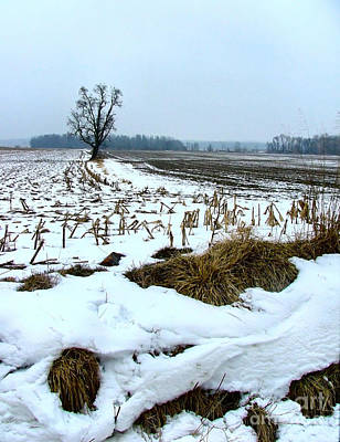 Amish Field In Winter Poster by Julie Dant